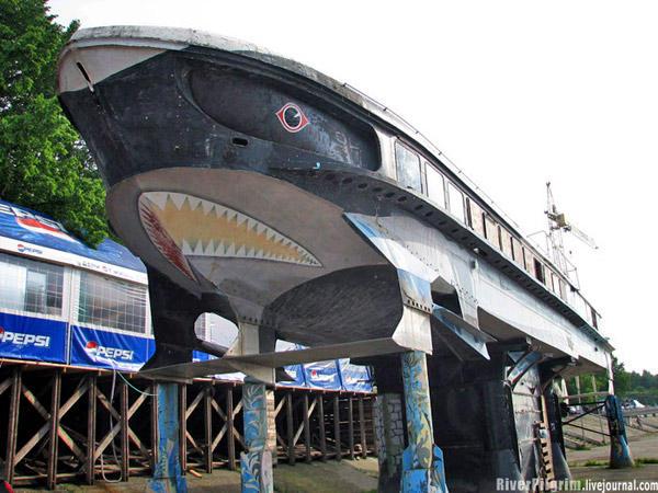 bar tubarão russia